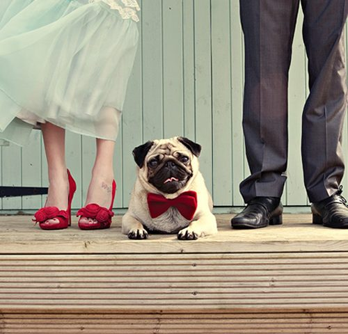 питомцы на свадьбе